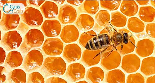 healthy, original and delicious bee honey
